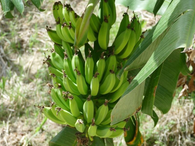 Anbau von Obst und Gemüse